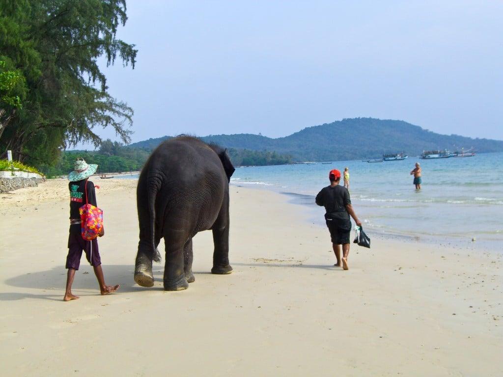 Elephant Krabi Thailand