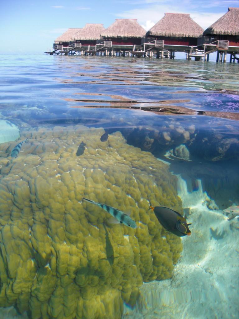 Underwater lagoon Hilton Moorea Lagoon Resort Tahiti