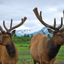 Wild Alaska: Land of Moose, the Mayor's Marathon and the Midnight Sun
