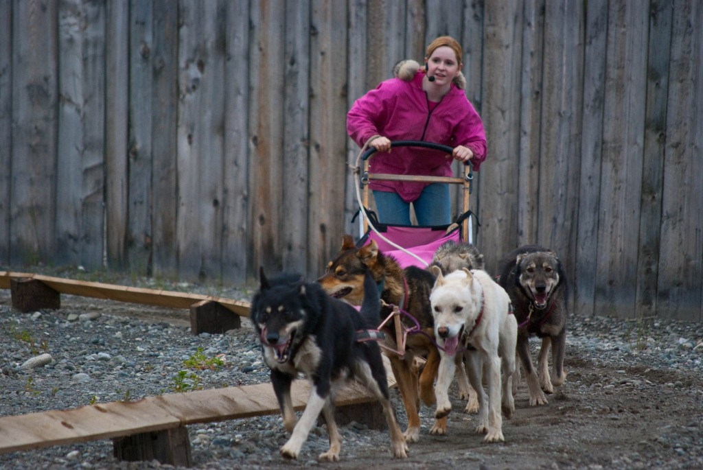 Seavey's Dog Sled Rodeo Anchorage Alaska