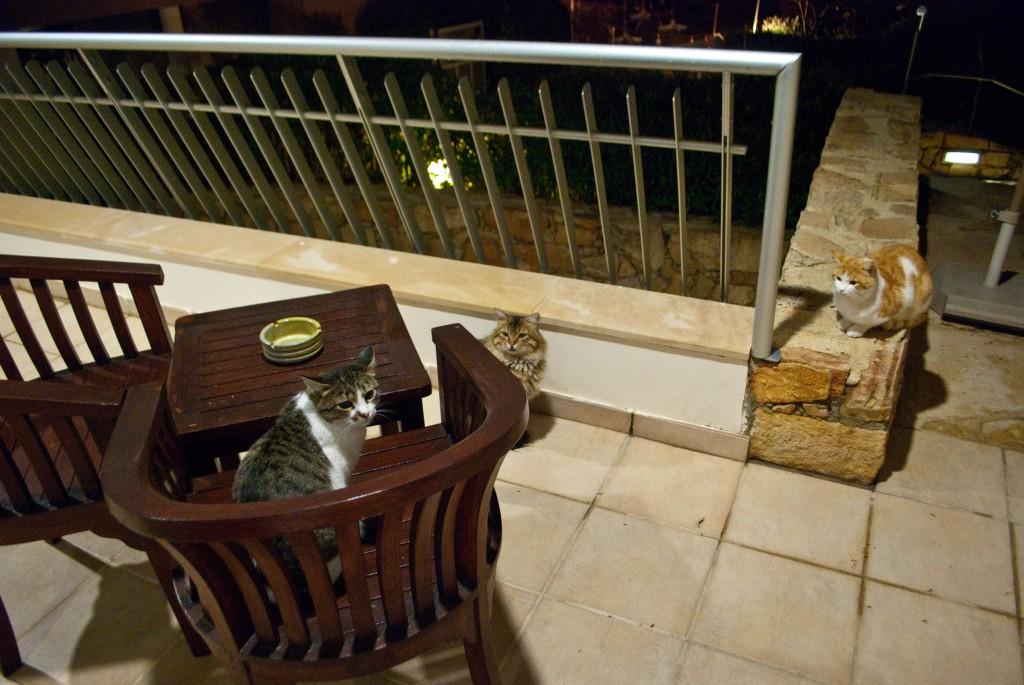 Cats Le Meridien Limassol Cyprus
