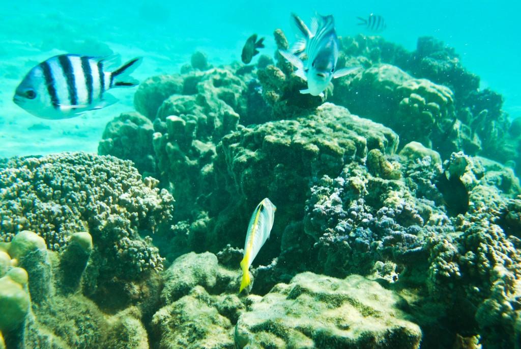 Underwater Moorea French Polynesia