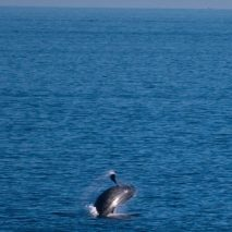 A Whale Tale from Cabo