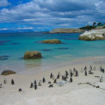 Photo of the Day – Boulders Beach South Africa