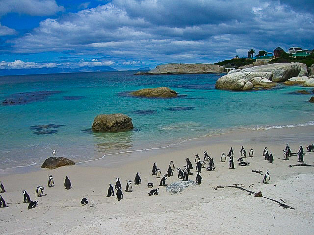 penguins Boulders Beach South Africa
