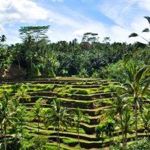 Photo of the Day – Ubud Bali