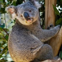 Photo of the Day – Lone Pine Koala Sanctuary, Brisbane