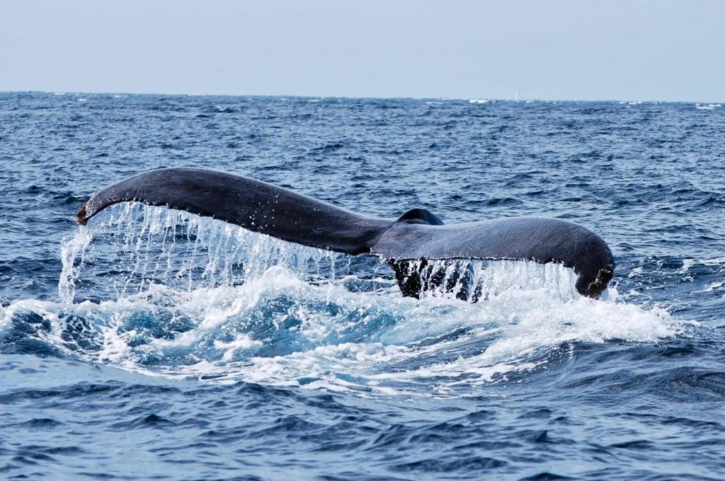 grey whale cabo san lucas mexico