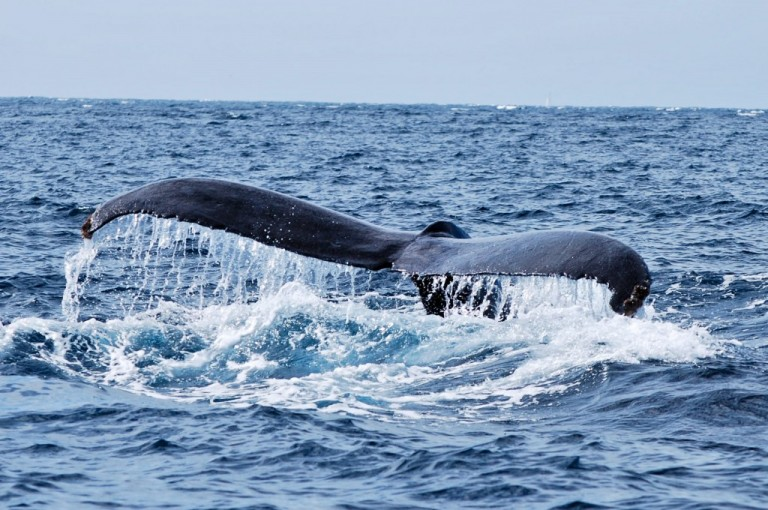 A Whale of a Time in Cabo