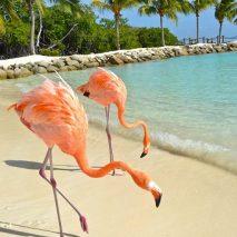 Photo of the Day – Flamingo Beach Aruba