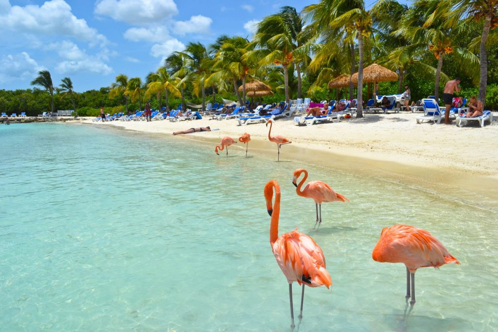 Flamingo Beach Aruba