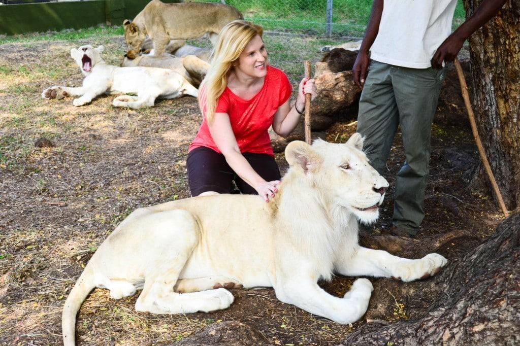 Lion encounter Casela Nature Park Mauritius