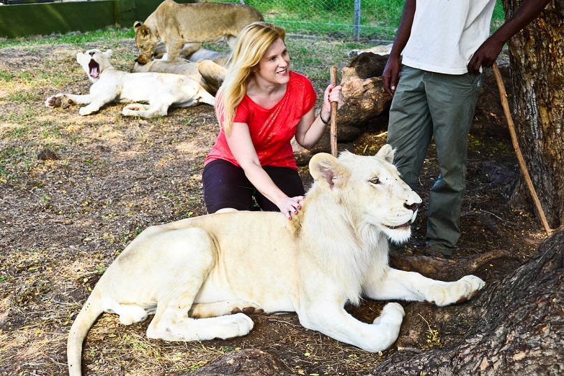 Casela Nature Park Lion Encounter Mauritius