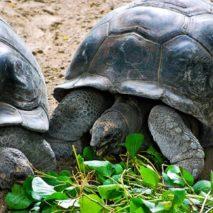 Photo of the Day – Giant Tortoises, Seychelles