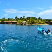Dolphins, Diving & Underwater Dating Dilemmas: All in a Day's Work on Roatan