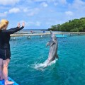 Dolphin trainer for a day Roatan