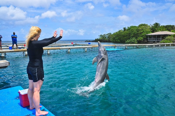 Working with dolphin Tony during my trainer-for-a-day program