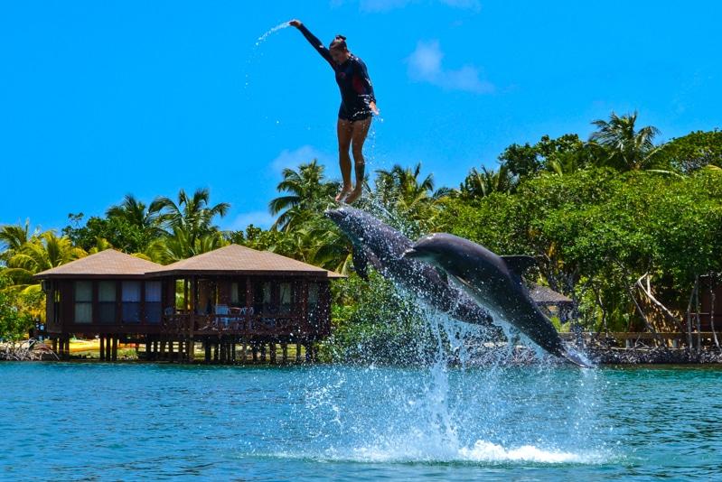 Dolphin Show Anthony's Key Resort Roatan