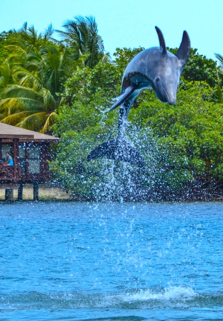 Dolphin Anthony's Key Resort Roatan