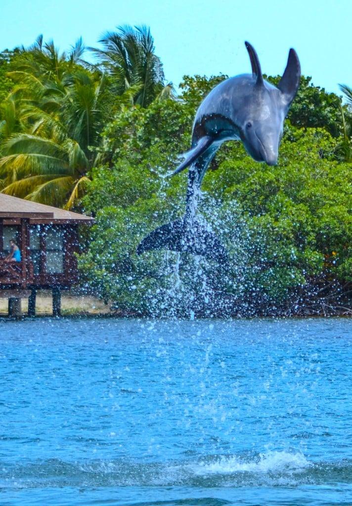 Dolphin Anthony's Key Resort Roatan