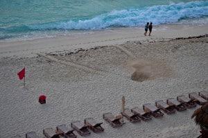 Sea turtle nest Cancun Mexico
