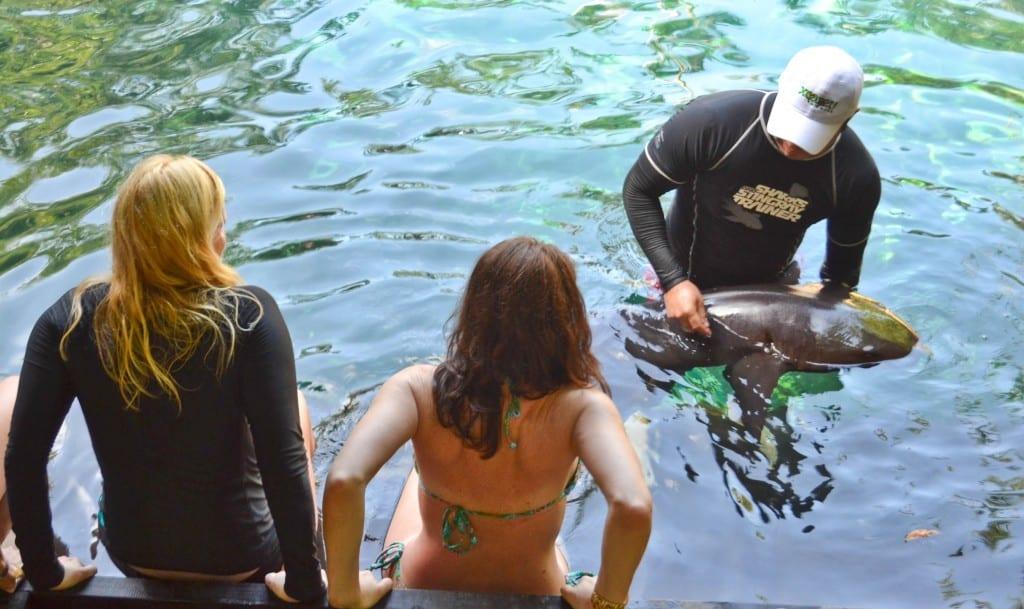 Shark Experience Xcaret Park Mexico