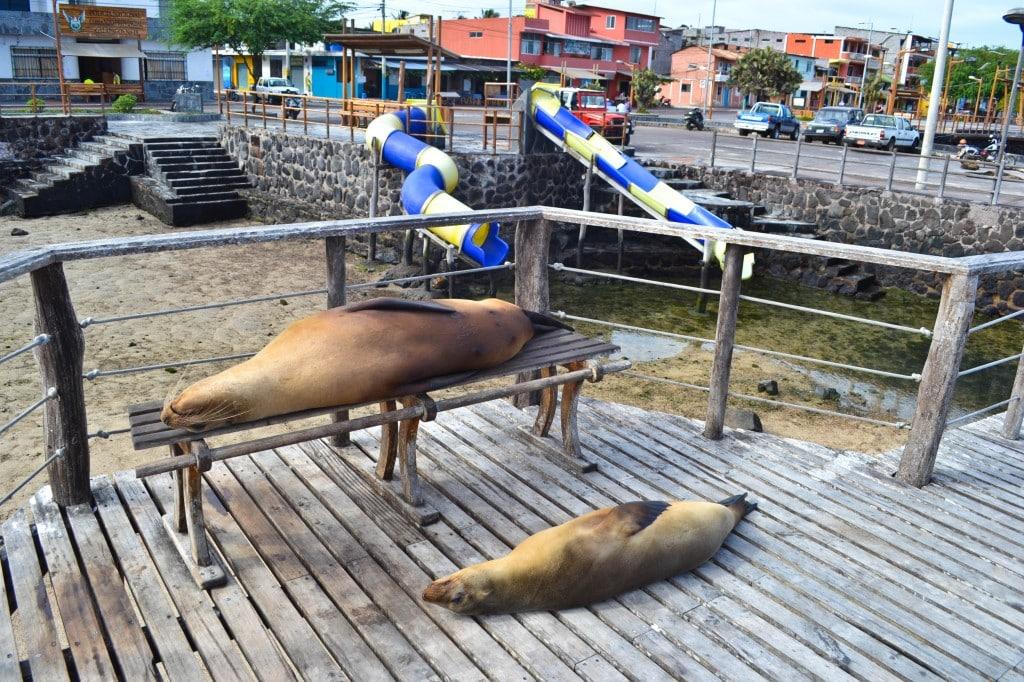 Sea Lions San Cristobal Galapagos