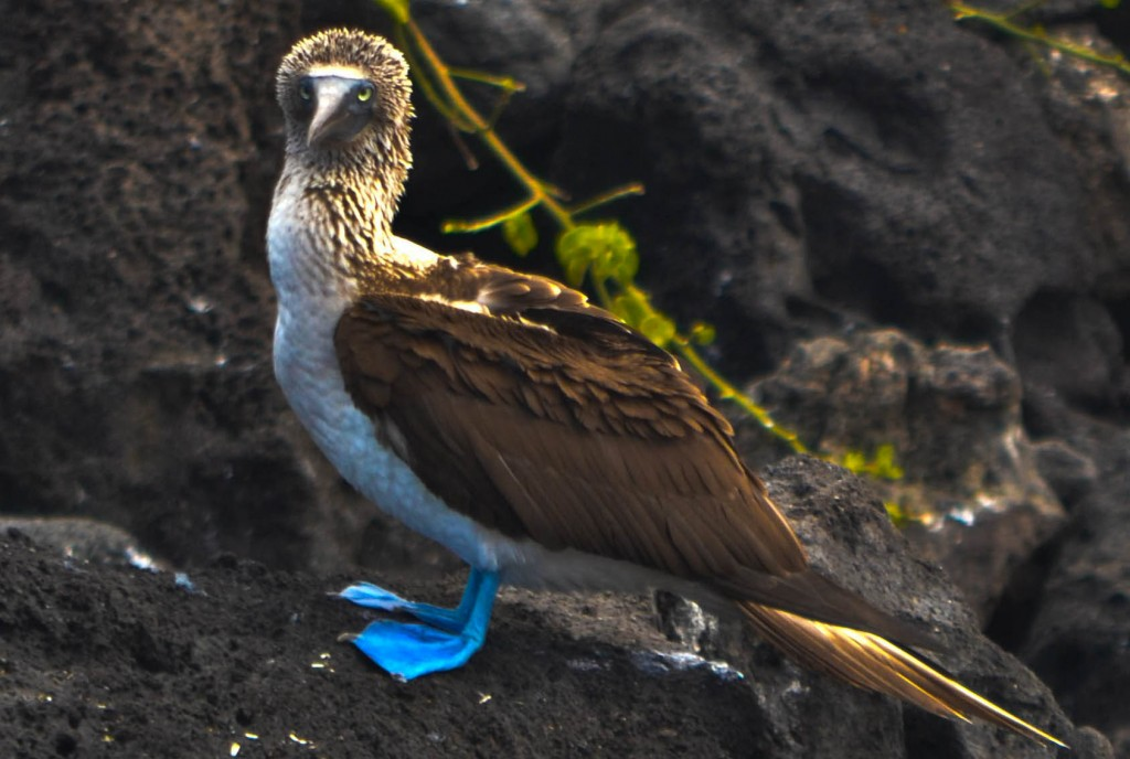 How to See the Galapagos Islands on a Budget