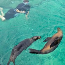 Photo of the Day – Sea lions, Isabela, Galapagos