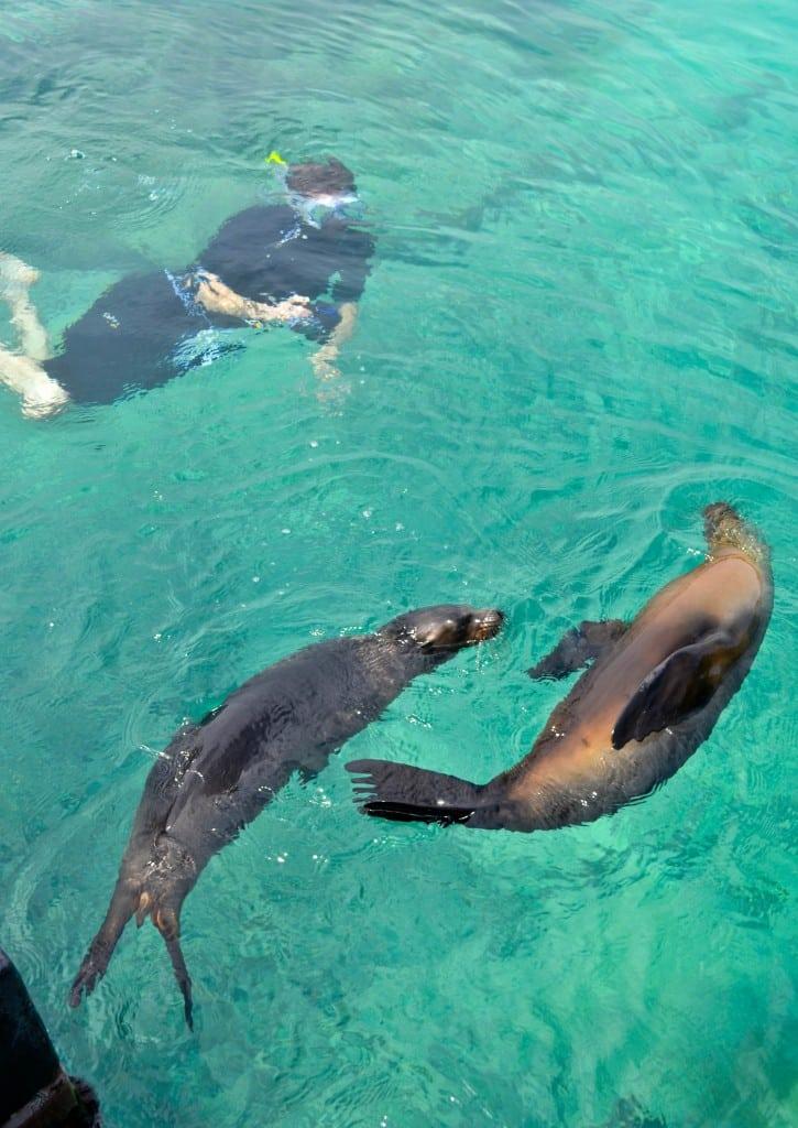 Sea lions Isabela Galapagos