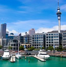 One Day in Auckland with the Kiwis
