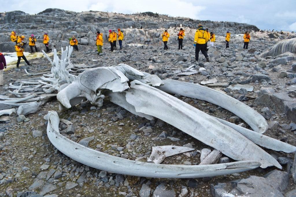 Whale bones Jougla Island Antarctica