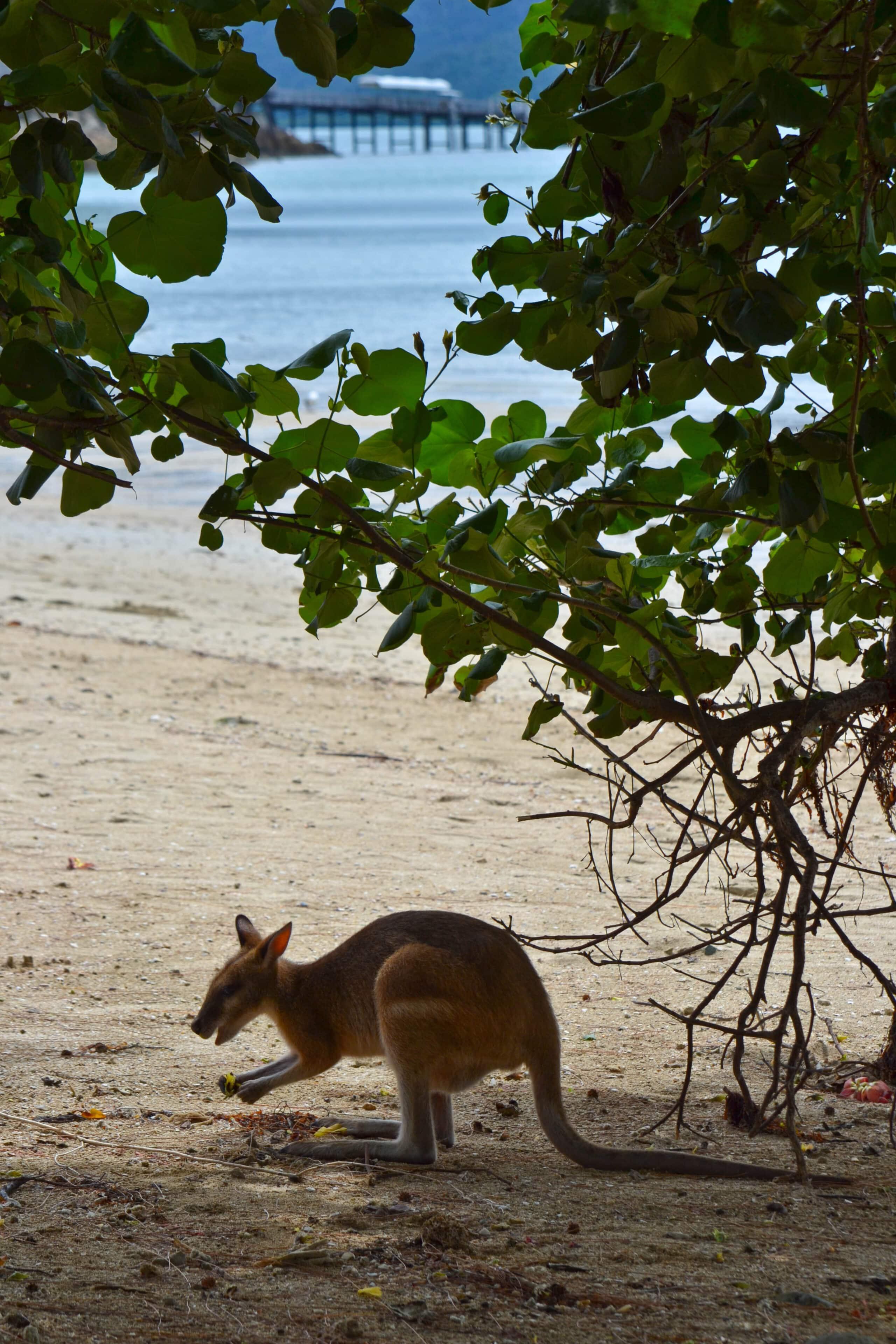 Wallaby Long Island Resort Whitsundays