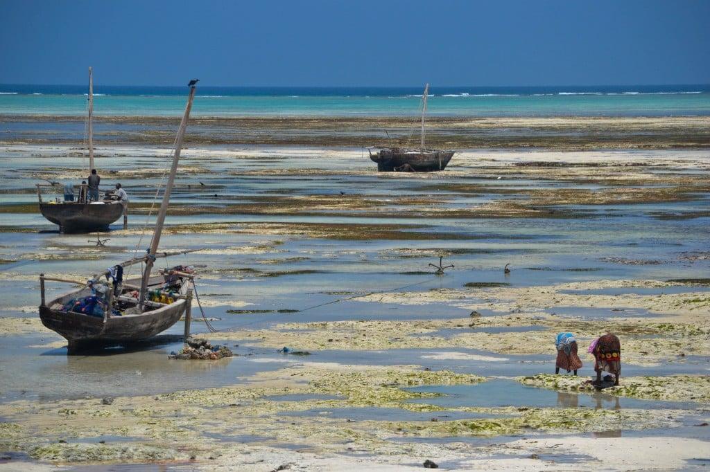 Dhows Nungwi Beach Zanzibar