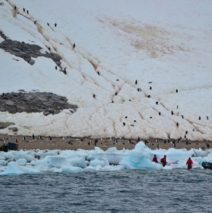 Photo of the Day – Neko Harbour Antarctica