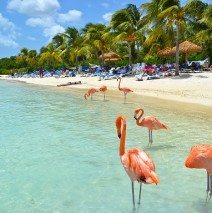Photo of the Day – Flamingo Beach, Aruba