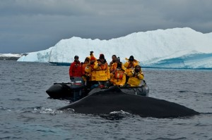 Whale Watching Pleneau Bay Antarctica
