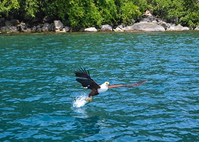 Fish-eagle Lake Malawi