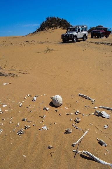 Human bones Namib Desert Namibia