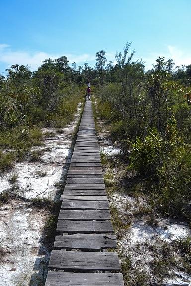 Bako National Park Sarawak Borneo