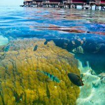 Photo of the Day – Moorea Lagoon, French Polynesia