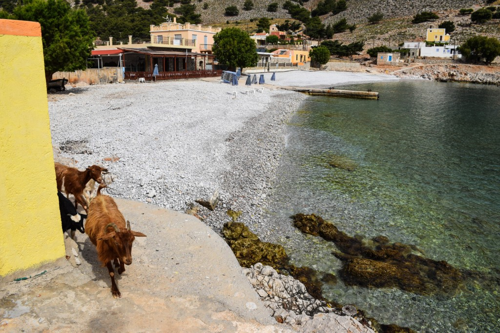 Goats Marathounda Beach Symi Greece