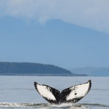 Photo of the Day – Whale Watching in Juneau, Alaska
