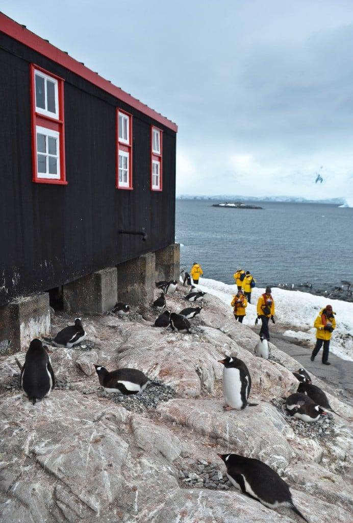 Port lockroy antarctica photo of the day round the for Port lockroy