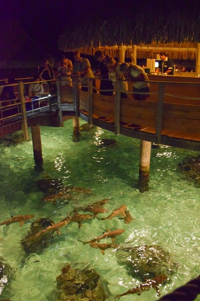 Hilton Moorea Lagoon Sharks