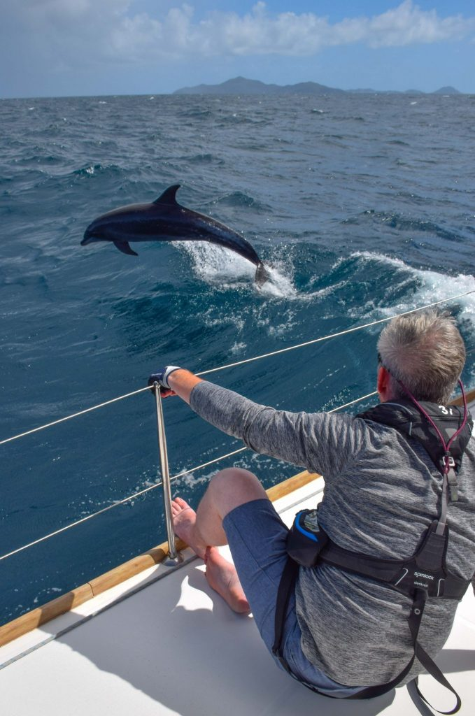 Learning How to Sail Caribbean Dolphins