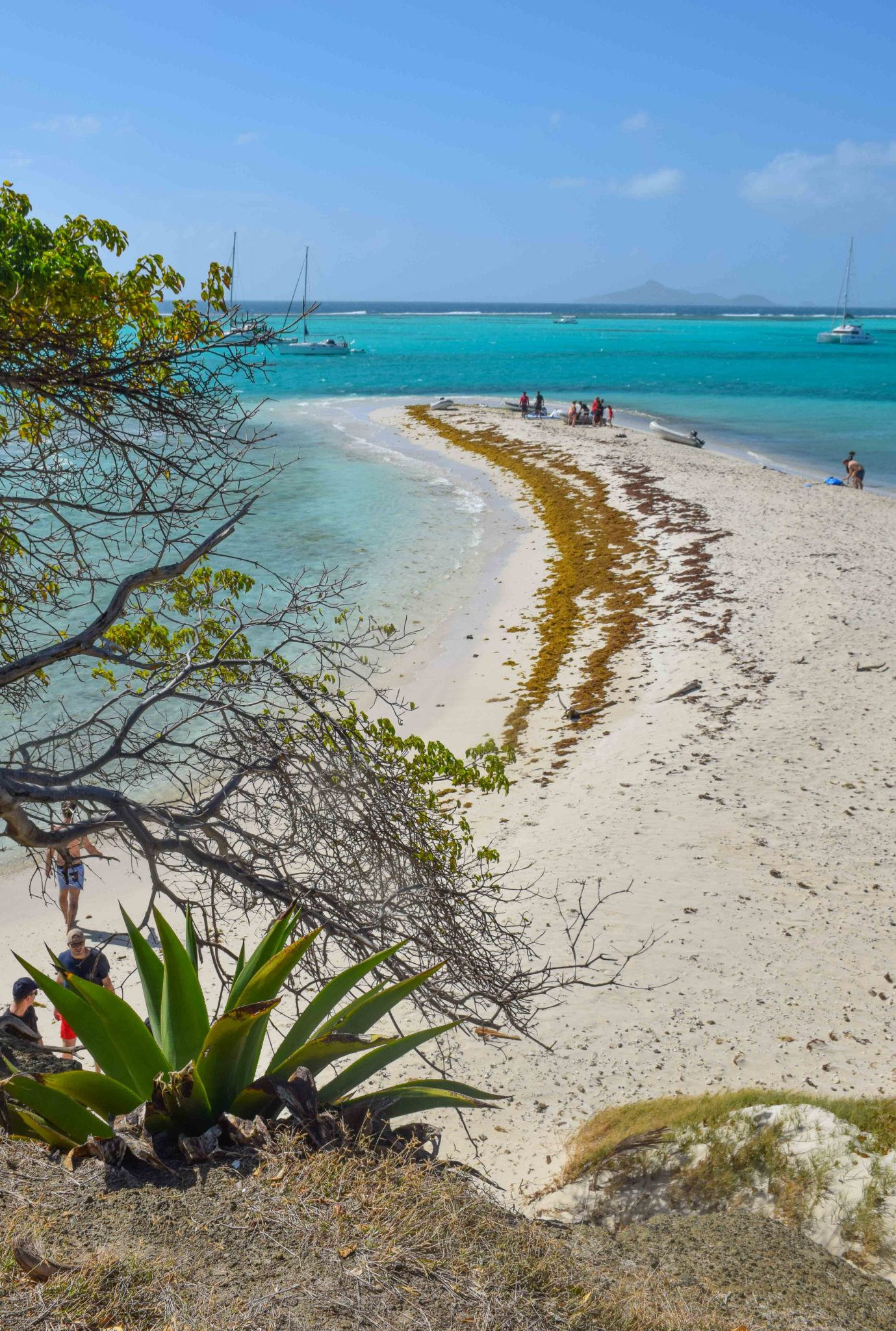 Tobago Cays St Vincent Grenadines