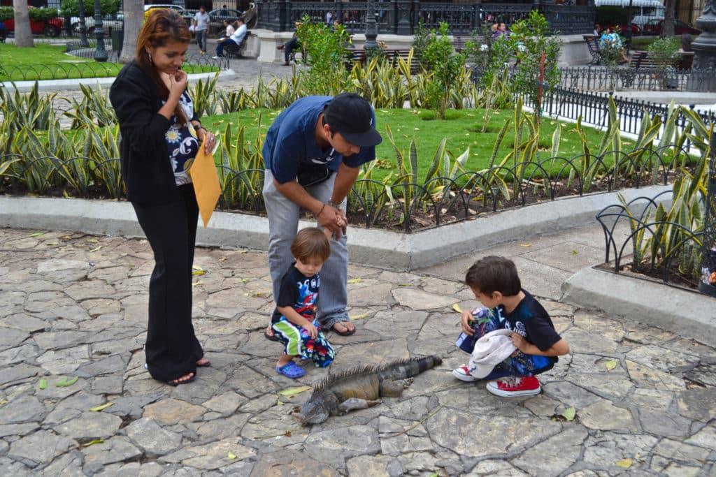 Seminario Park Guayaquil Ecuador