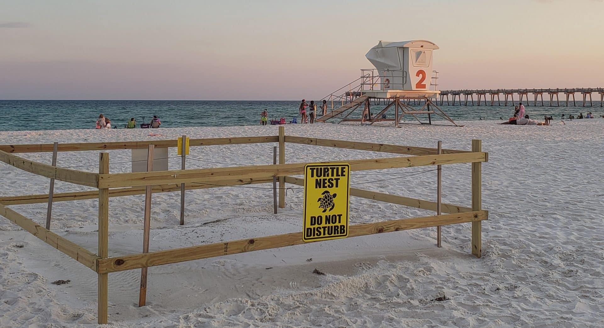 Sea Turtle Nest Pensacola Beach Florida