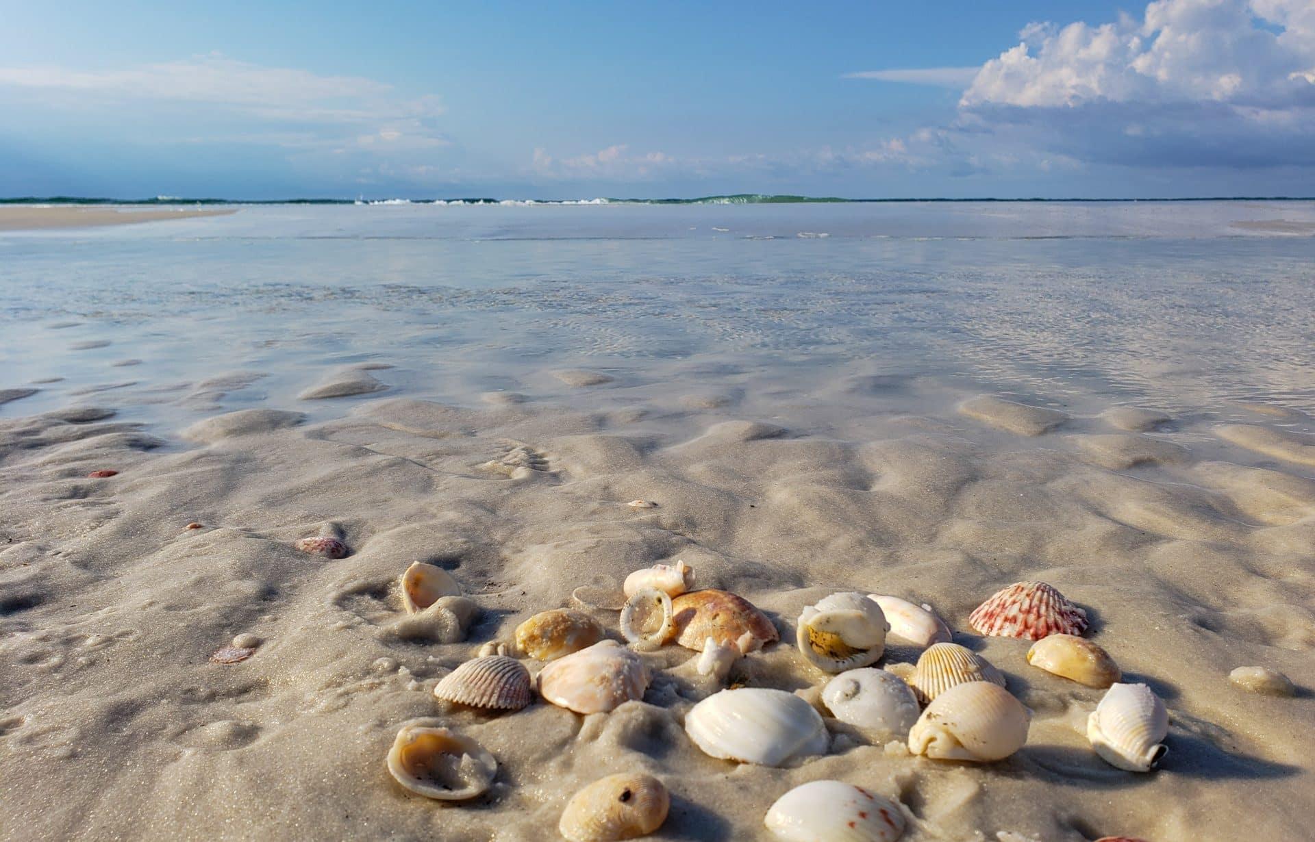 Shells Pensacola Beach Florida